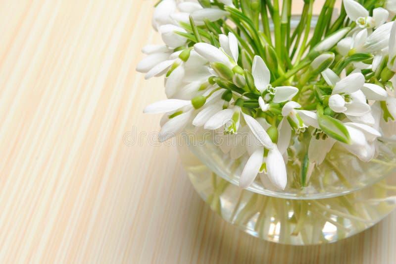Flores de Snowdrop em um vaso fotografia de stock royalty free
