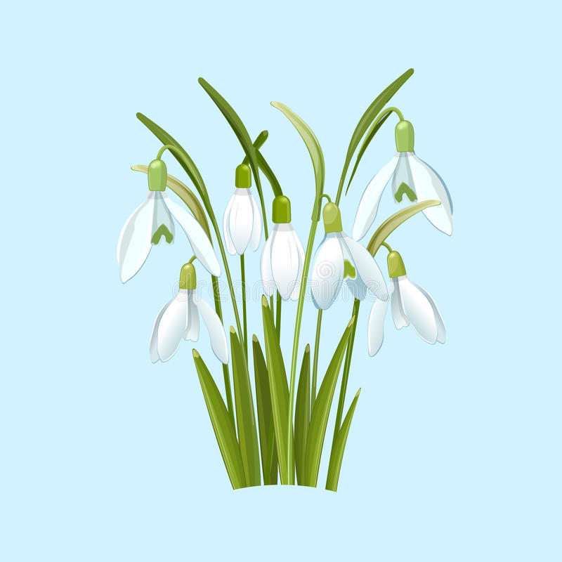 Flores de Snowdrops en un fondo azul ilustración del vector