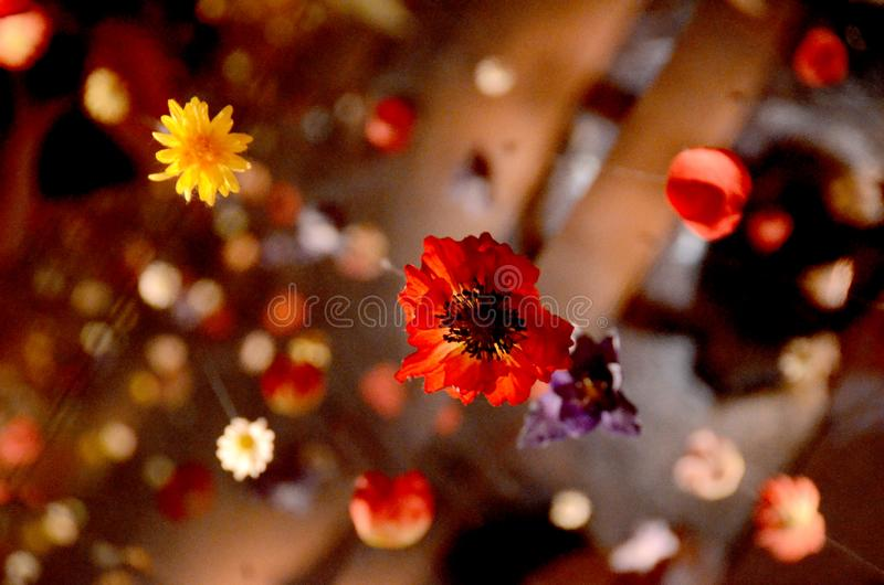 Flores de suspens?o imagens de stock