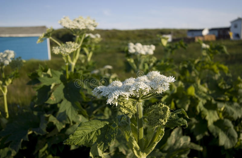 Flores de Terra Nova imagem de stock royalty free