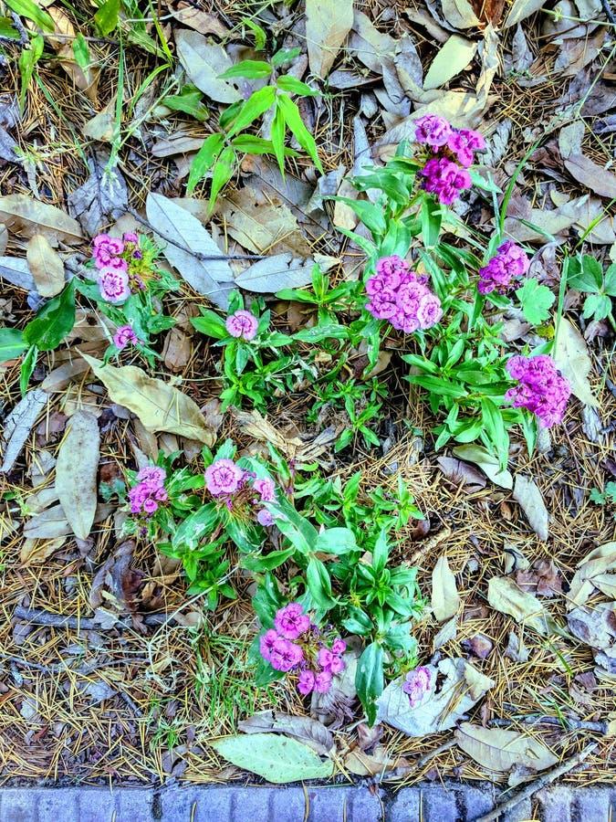 Flores de tierra fotografía de archivo