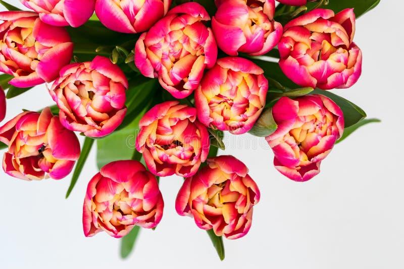 Flores de tulipas vermelhas fotografia de stock royalty free