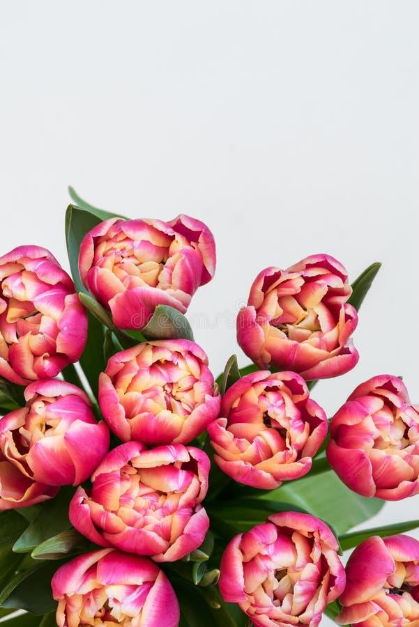 Flores de tulipas vermelhas fotos de stock