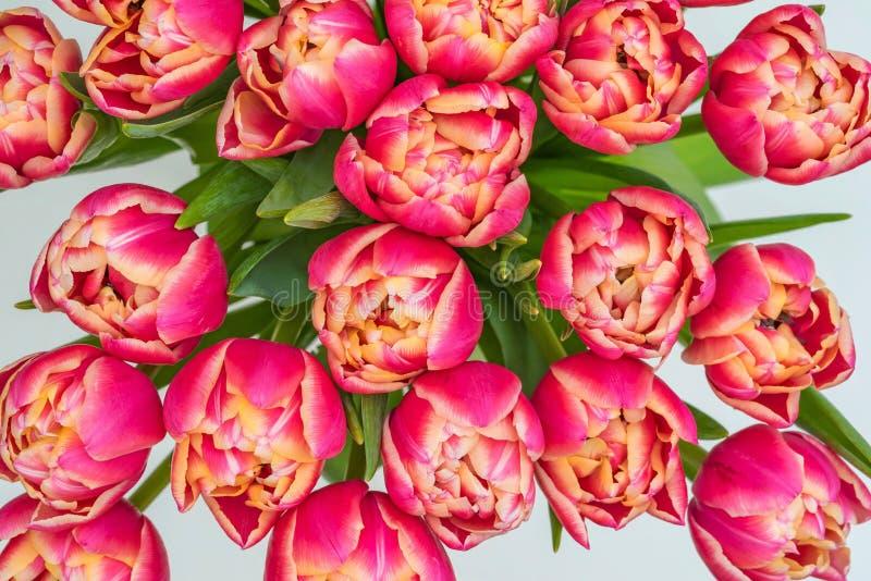 Flores de tulipas vermelhas fotografia de stock