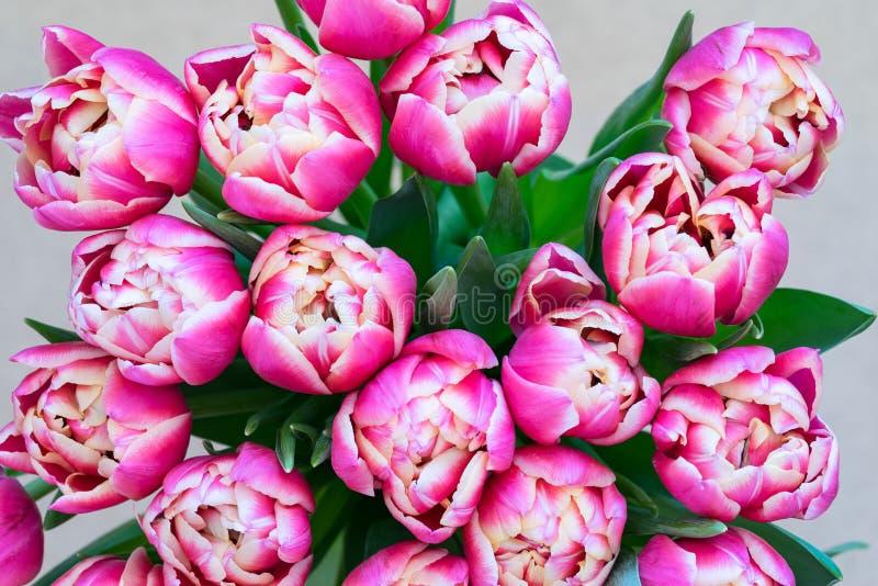 Flores de tulipas vermelhas fotos de stock royalty free