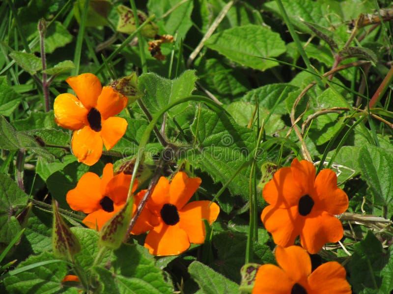 Flores de verano fotografia stock