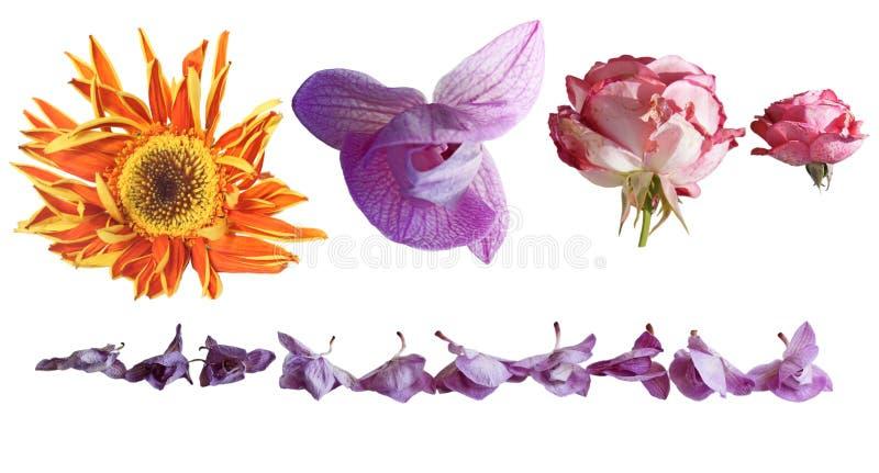 Flores de Wither fotografía de archivo libre de regalías