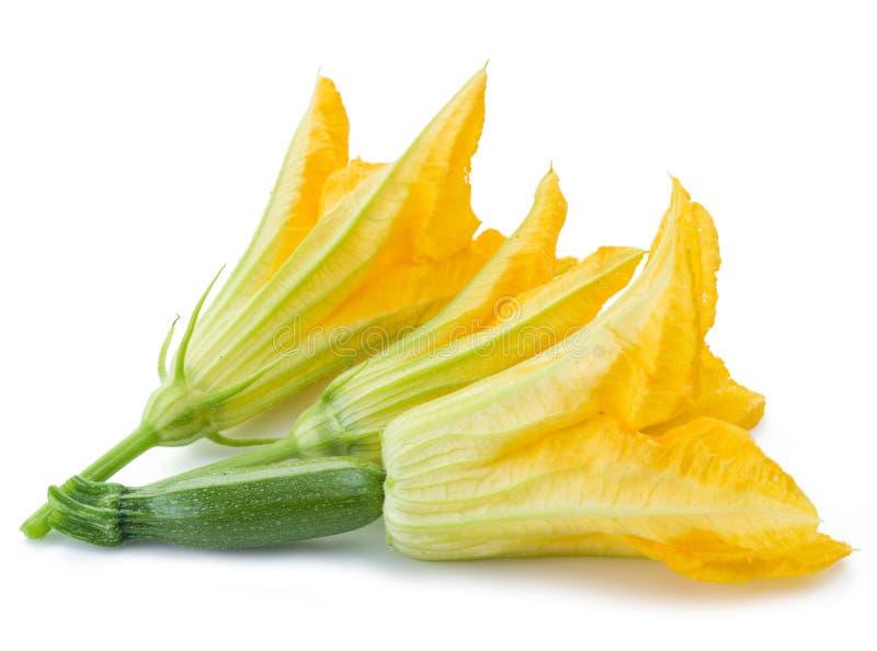 Flores de zucchini sobre un fondo blanco fotografía de archivo