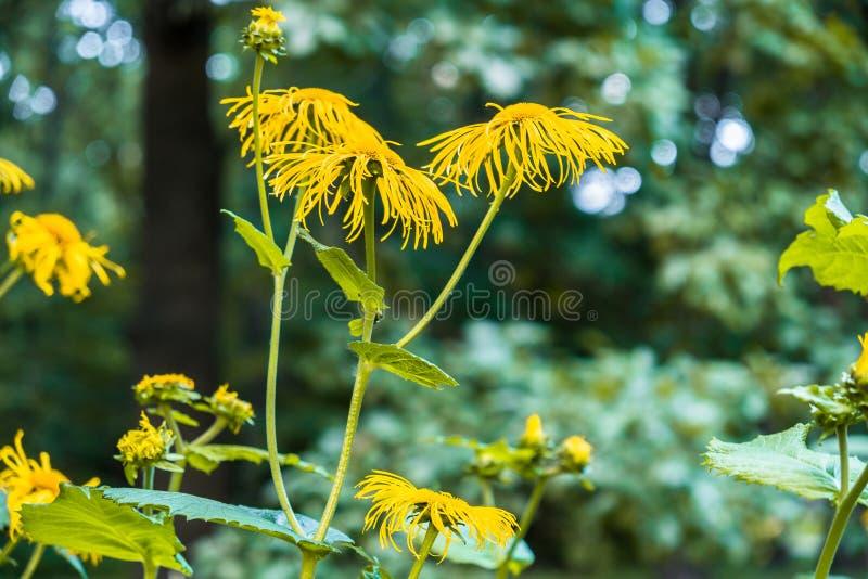 Flores decorativas amarillas preciosas en fondo verde borroso imágenes de archivo libres de regalías