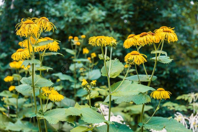 Flores decorativas amarillas preciosas en fondo verde borroso fotografía de archivo