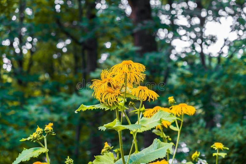 Flores decorativas amarillas preciosas en fondo verde borroso imagen de archivo libre de regalías