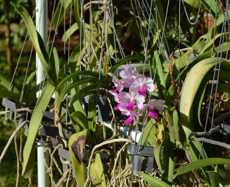 Flores decorativas da orquídea fotos de stock royalty free