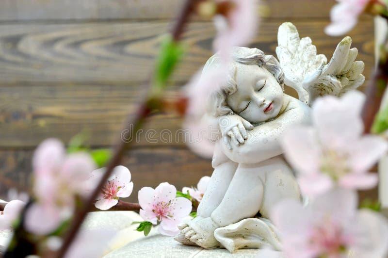 Flores del ángel y de la primavera fotografía de archivo