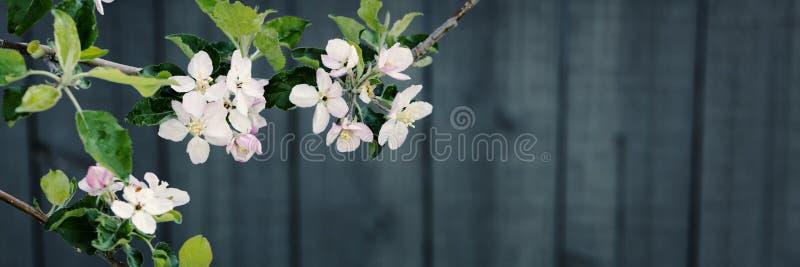Flores del árbol de la primavera en flor fotos de archivo
