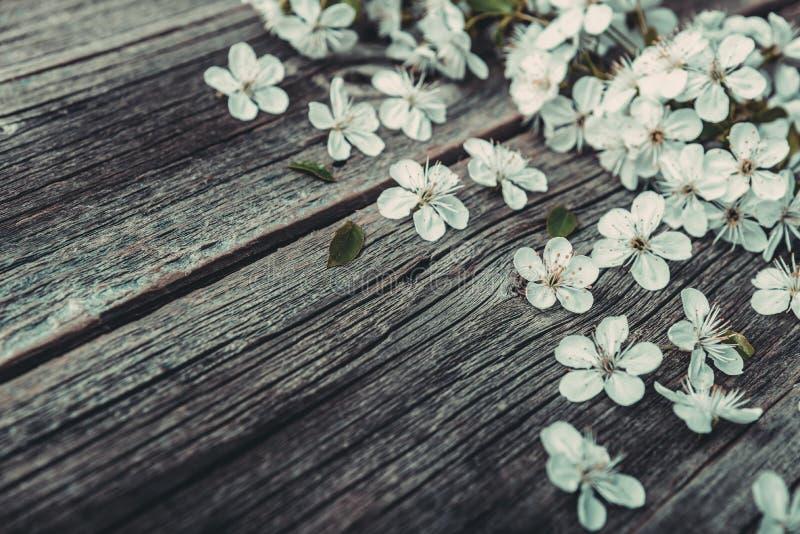Flores del árbol y de la cereza de Sakura en fondo de madera imagen de archivo libre de regalías