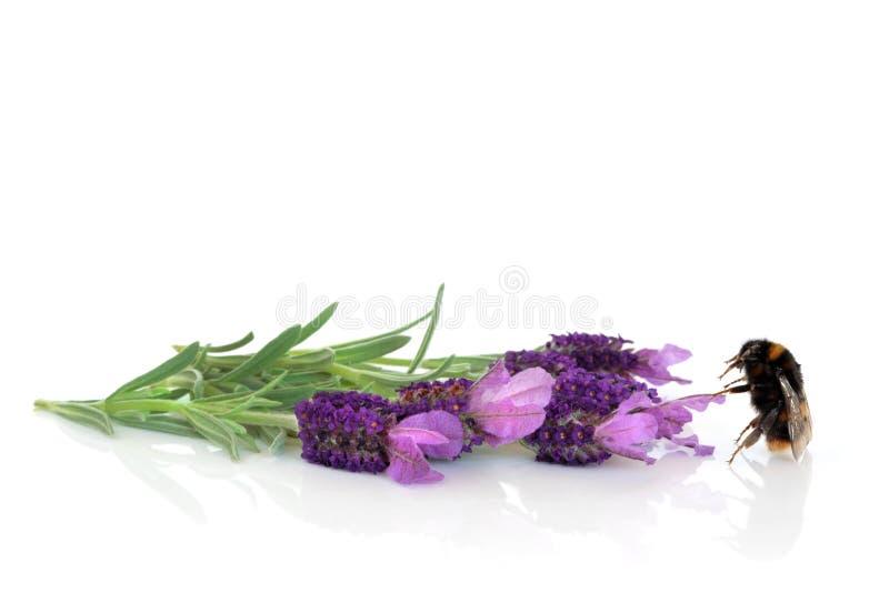 Flores del abejorro y de la lavanda fotos de archivo libres de regalías