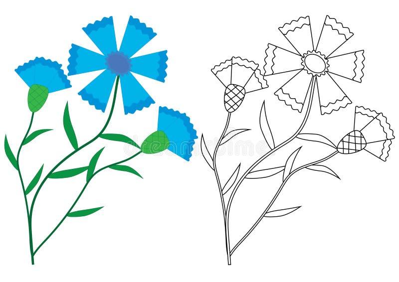 Flores del aciano de la centaurea Libro de colorear, illustratio del vector stock de ilustración