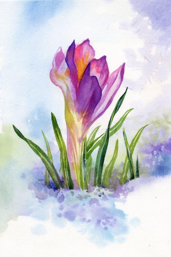 Flores del azafrán de la primavera en nieve libre illustration