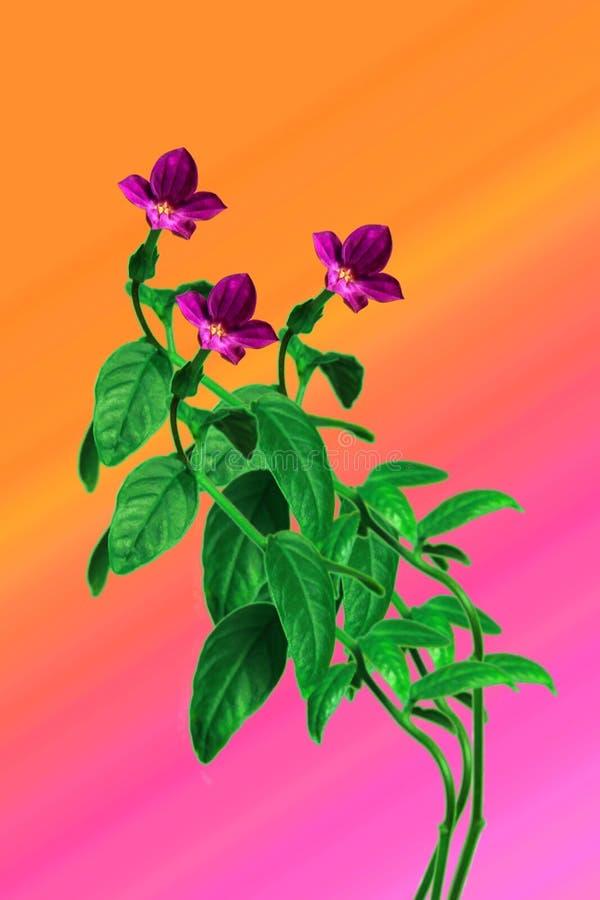 Flores del bígaro fotos de archivo libres de regalías