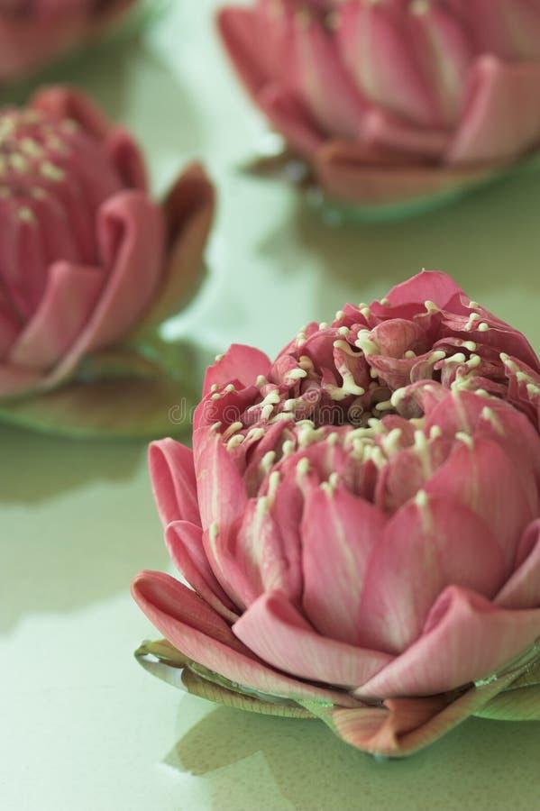 Flores del balneario imagenes de archivo