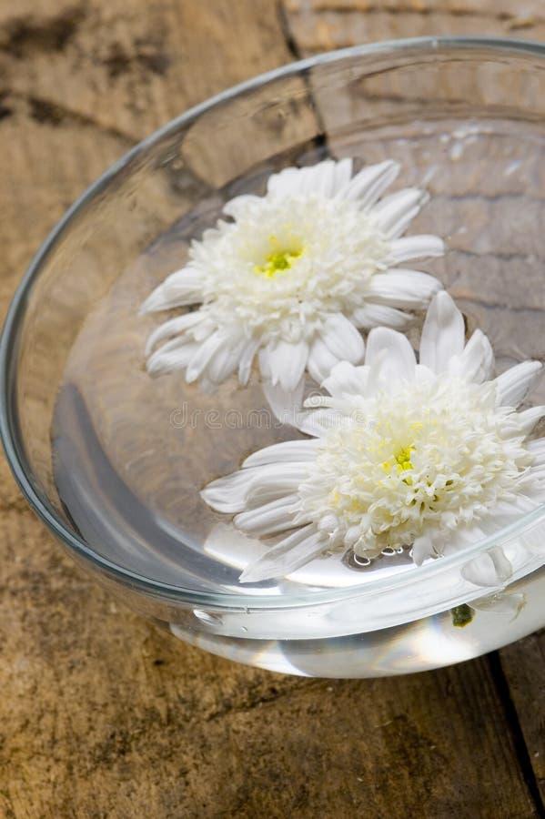 Flores del balneario fotografía de archivo libre de regalías