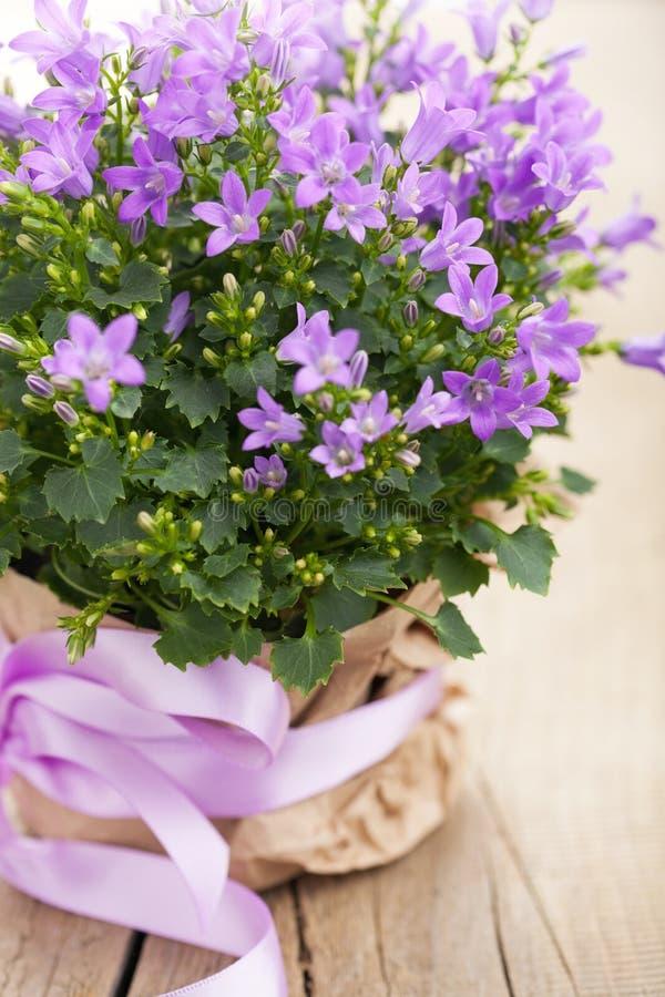 Flores del Bluebell fotos de archivo libres de regalías