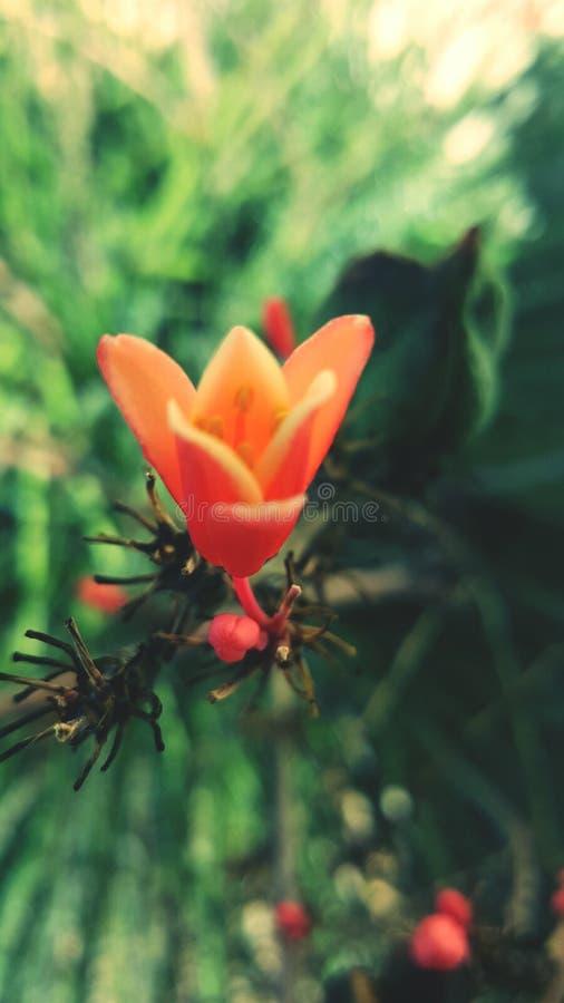 Flores del cactus fotografía de archivo