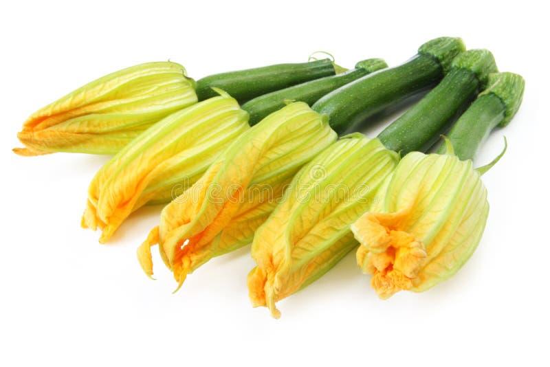 Flores del calabacín fotos de archivo