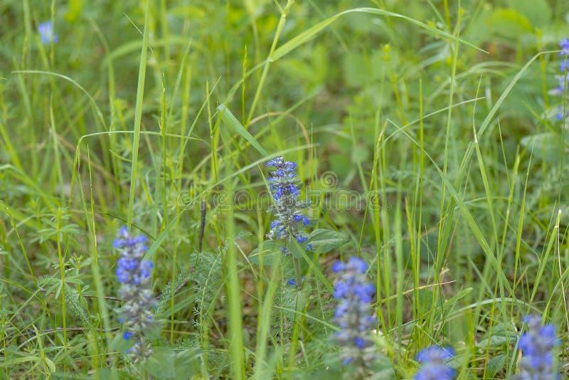 Flores del campo imagen de archivo libre de regalías