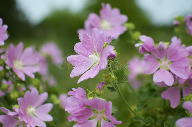 Flores del campo imagen de archivo