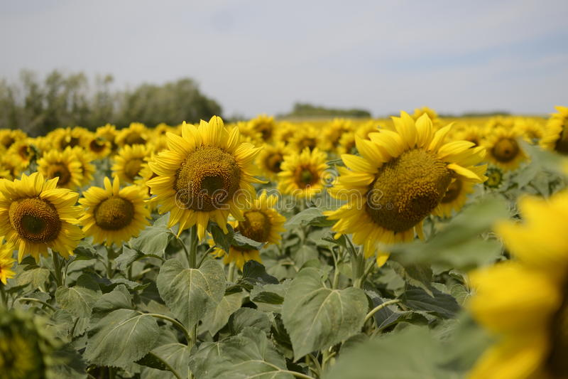 Flores del campo fotografía de archivo