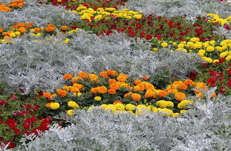 Flores del campo de las maravillas de diversos colores foto de archivo libre de regalías