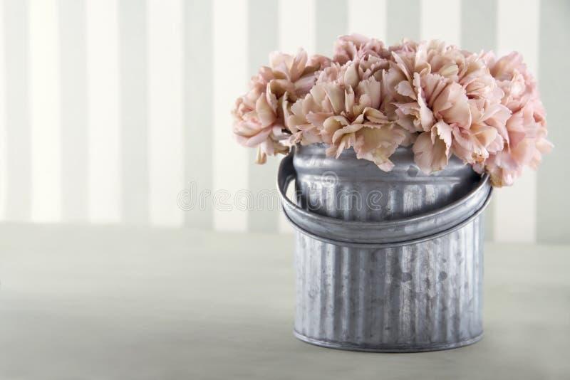 Flores del clavel del color del albaricoque fotos de archivo