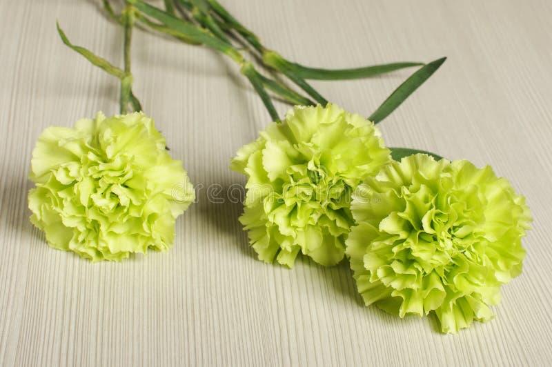 3 flores del clavel en el piso imagen de archivo libre de regalías