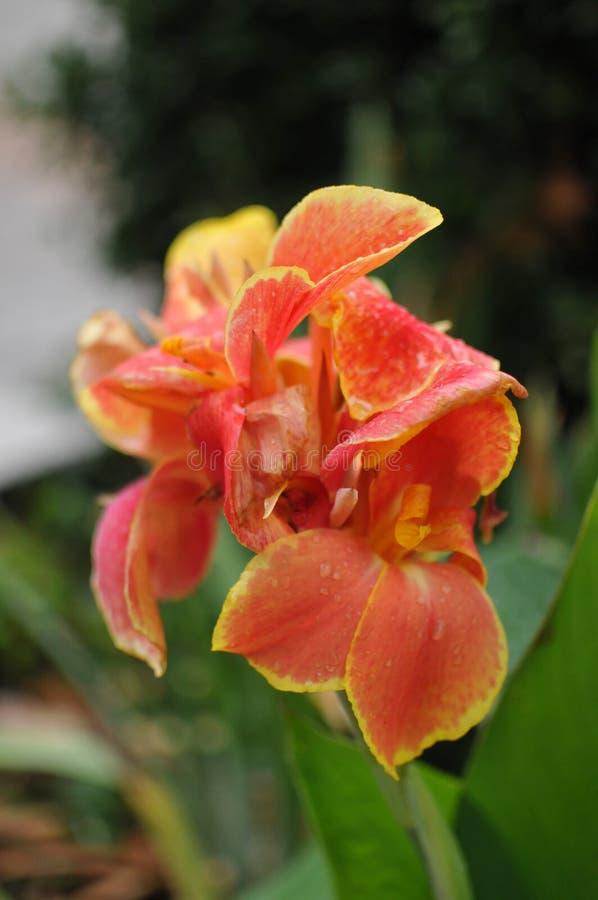 Flores del color del verano imágenes de archivo libres de regalías