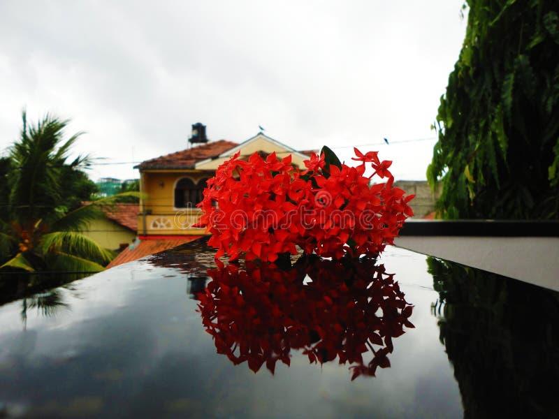 Flores del color rojo imagen de archivo