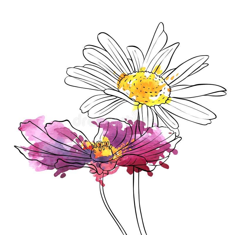 Flores del dibujo del vector de la margarita stock de ilustración
