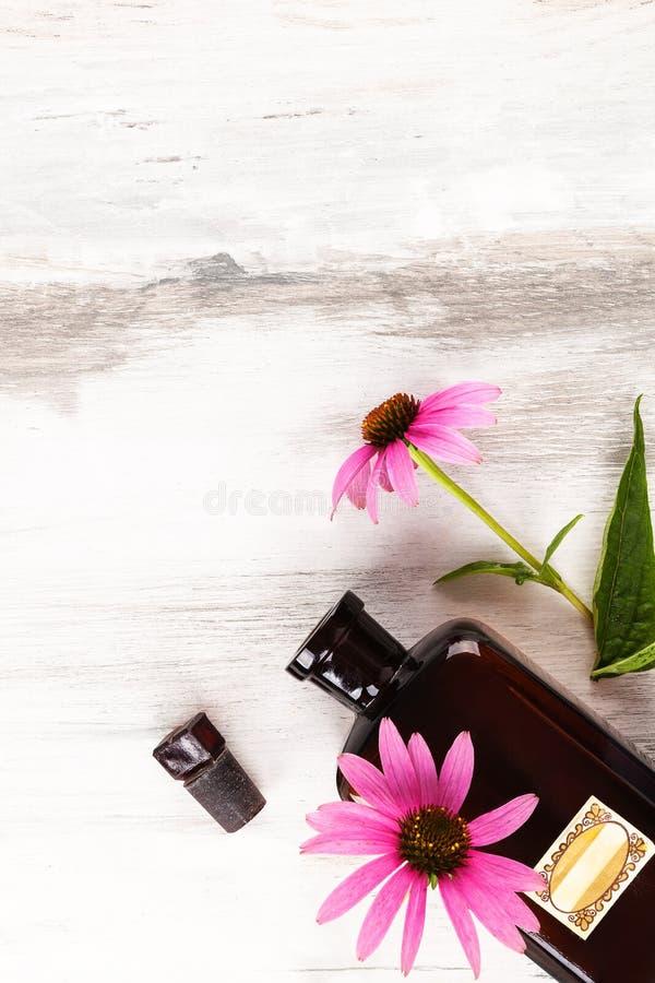Flores del Echinacea de la medicina foto de archivo libre de regalías