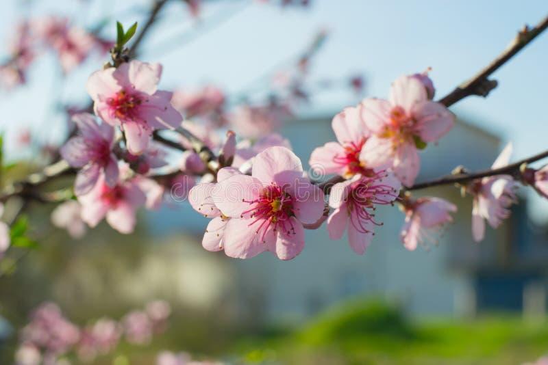 Flores del flor fotos de archivo libres de regalías
