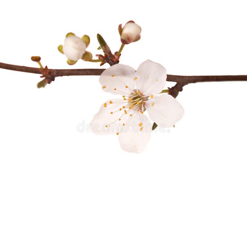 Flores del flor de la primavera imagenes de archivo