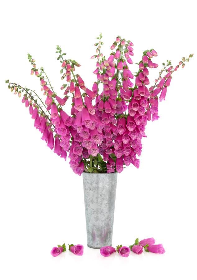 Flores del Foxglove fotos de archivo libres de regalías