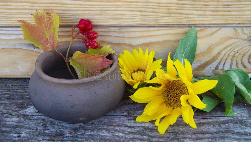 Flores del girasol y una puntilla del viburnum fotografía de archivo libre de regalías