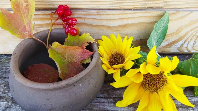 Flores del girasol y una puntilla del viburnum fotos de archivo libres de regalías