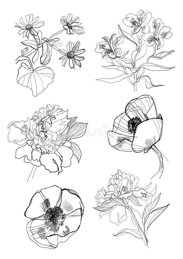 Flores del gráfico de la mano fijadas ilustración del vector