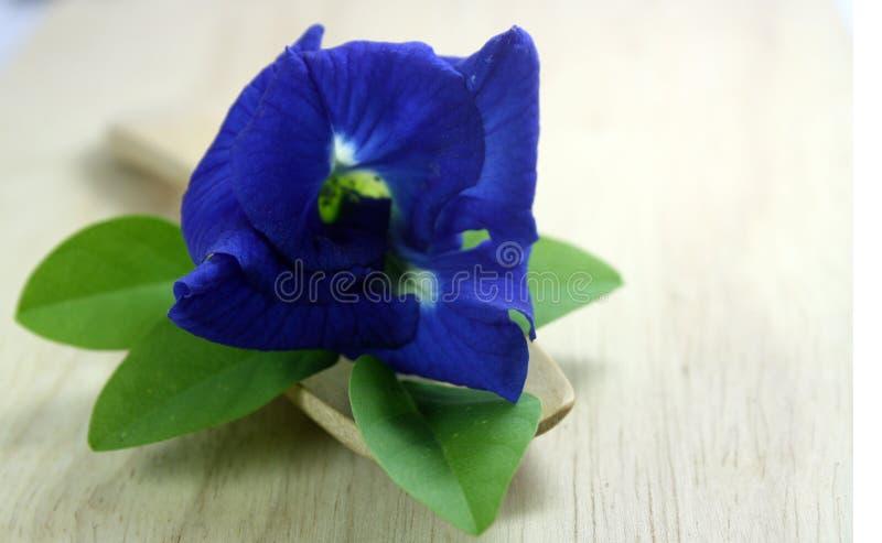 Flores del guisante de mariposa foto de archivo
