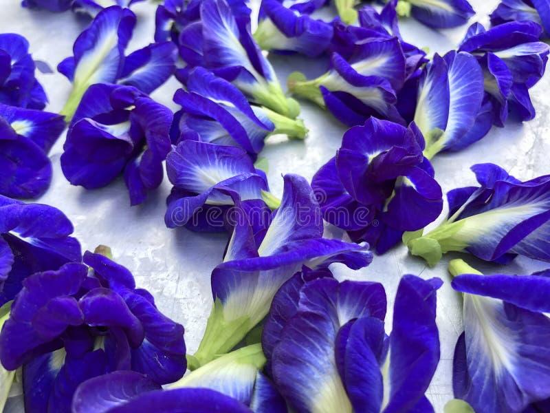 Flores del guisante de mariposa imágenes de archivo libres de regalías