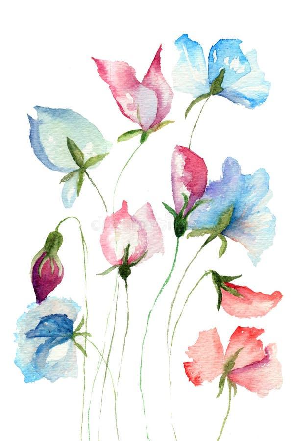 Flores del guisante dulce stock de ilustración