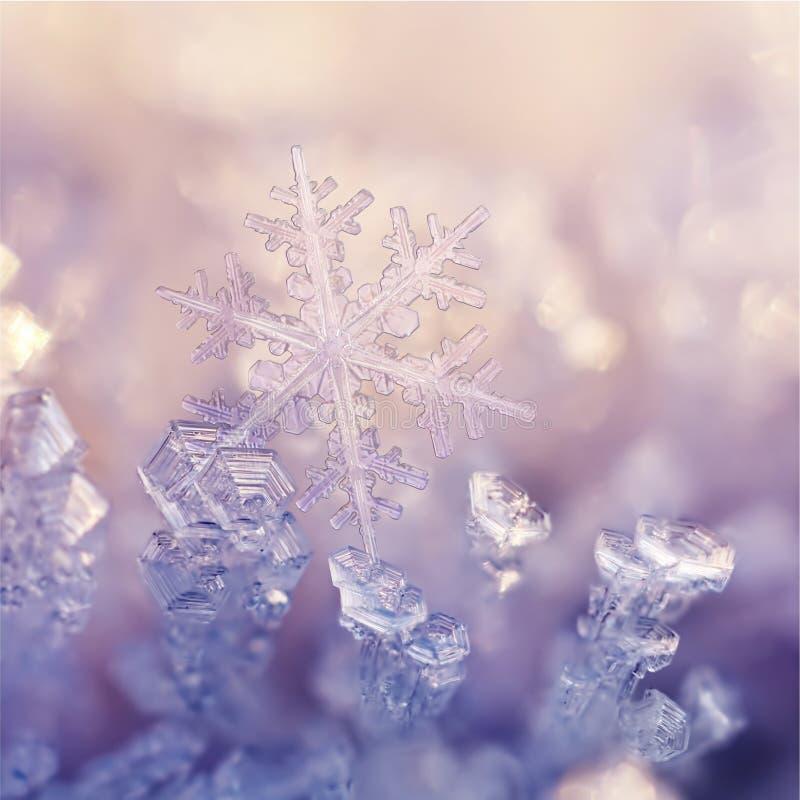 Flores del invierno imagenes de archivo