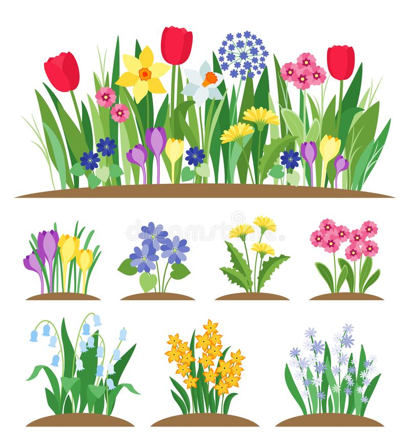 Flores del jardín de la primavera Hierba y planta Vector de florecimiento de la primavera temprana stock de ilustración
