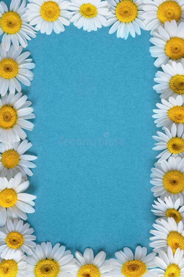 Flores del jardín sobre fondo azul de la tabla contexto con el espacio de la copia imagen de archivo